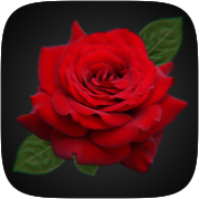 Rose Effect Instagram AR filter icon